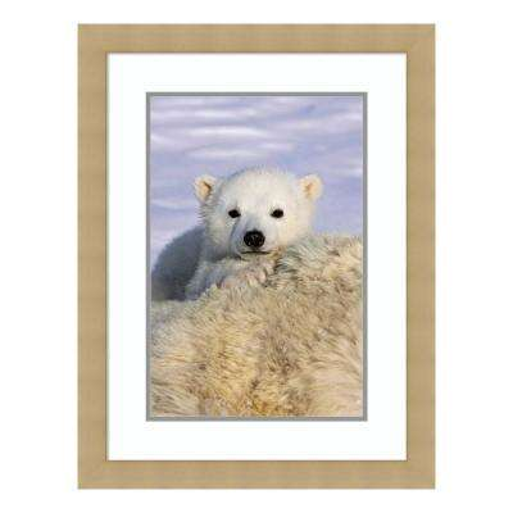 """Polar Bear cub peeking over mothers body, Wapusk National Park, Manitoba, Canada"" by Suzi Eszterhas Framed Wall Art"