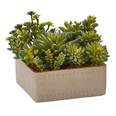 7 in. Indoor Mixed Succulent Artificial Plant with Decorative Planter