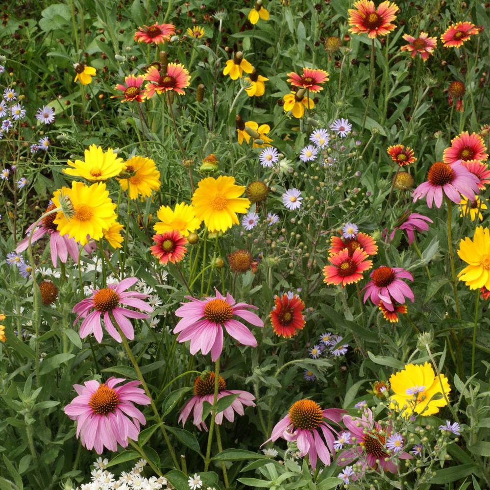 Honey Bee Attractor Flowering Seed Mixture (300 Seed Packet)