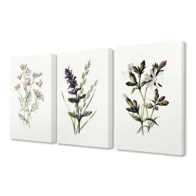 "16 in. x 20 in. ""Purple and White Floral Botanical Illustrations"" by Artist Lettered and Lined Canvas Wall Art(3Pieces)"