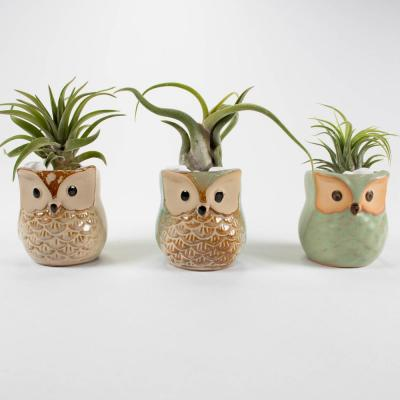 Air Plant Trio (Tillandsias) - Live Plants in 2.3 in. Brown, Tan Color Ceramic Owls Pot Set w/ White Stone (3-Pack)