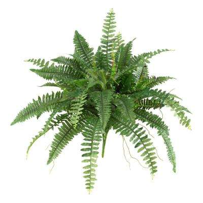 40 in. Boston Fern (Set of 2)