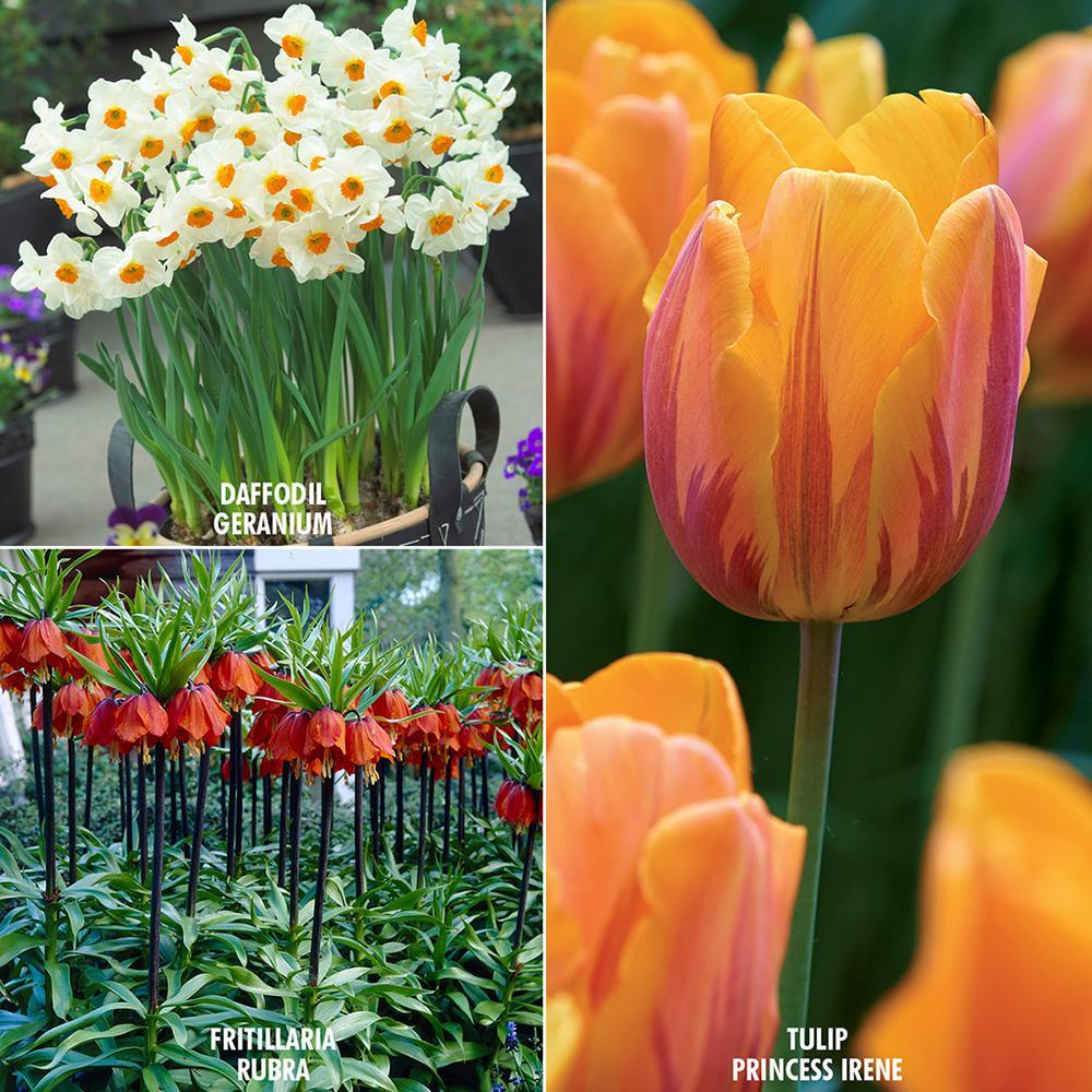 Fall - Perennial - Orange - Flower Bulbs - Garden Plants & Flowers ...