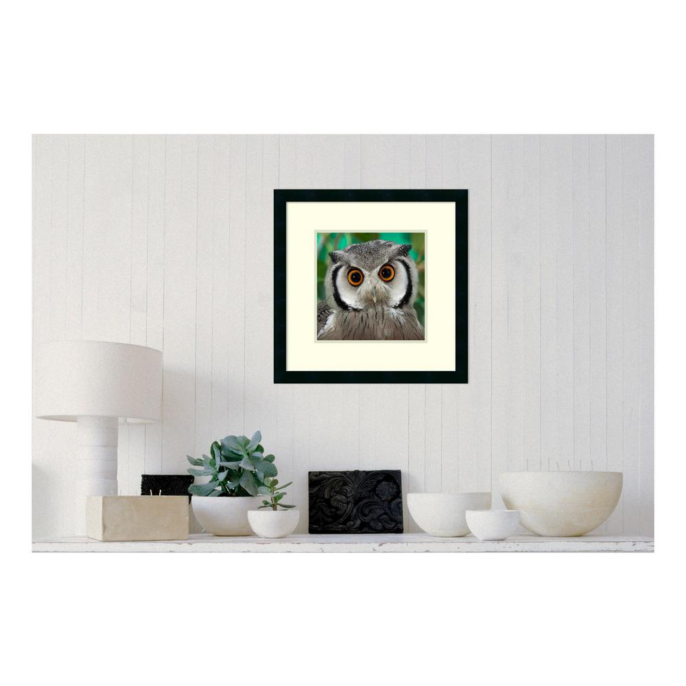 Amanti Art 21 in. W x 21 in. H \'Southern White-faced Owl portrait ...