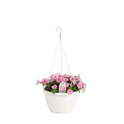 DIY Hanging Basket Kit Supertunia Vista Bubblegum Flower Pillow with 10 in. Container