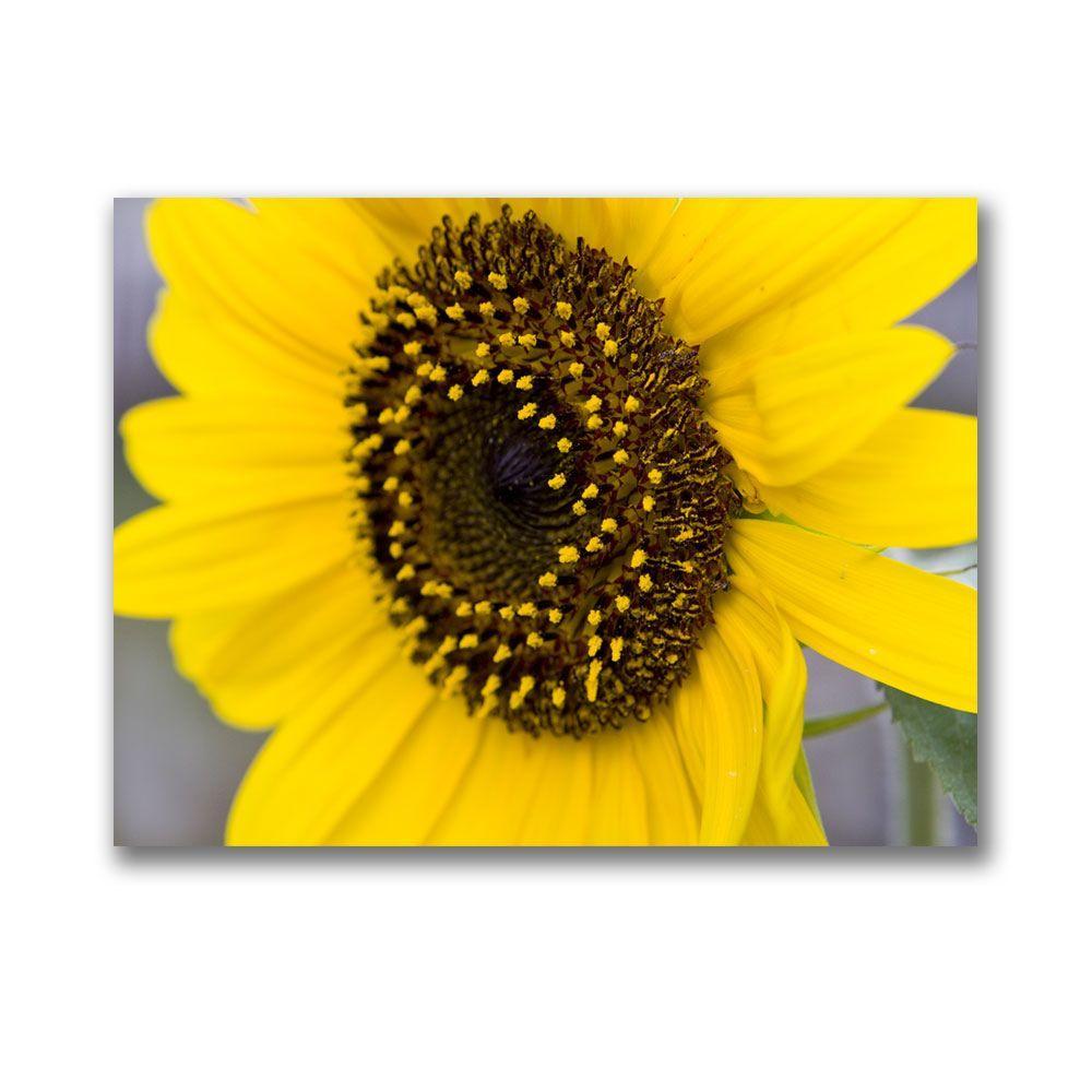 null 14 in. x 19 in. Sunflower Canvas Art