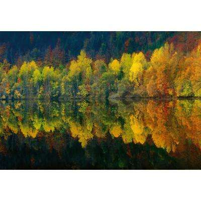 Autumn Forest Lake Wall Mural