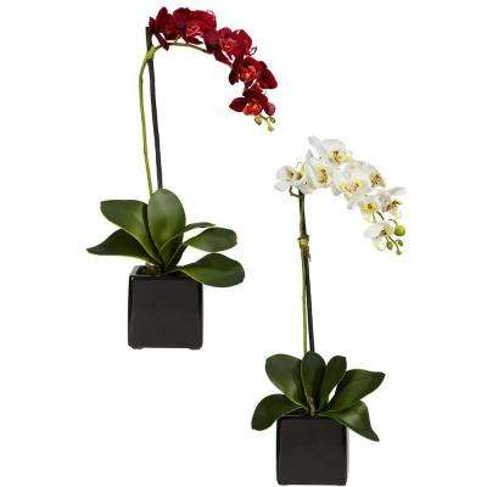 20 in. H Assorted Phaleanopsis Orchid with Black Vase Silk Arrangement (Set of 2)