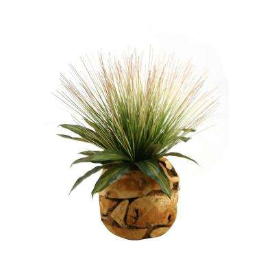 Indoor Tall onion Grass and Dracaena Leaves in Wooden Root Ball