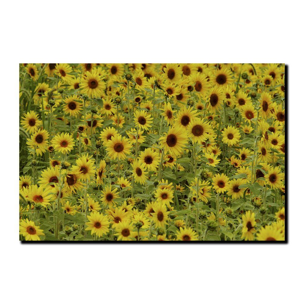 18 in. x 24 in. A Sunflower Day Canvas Art