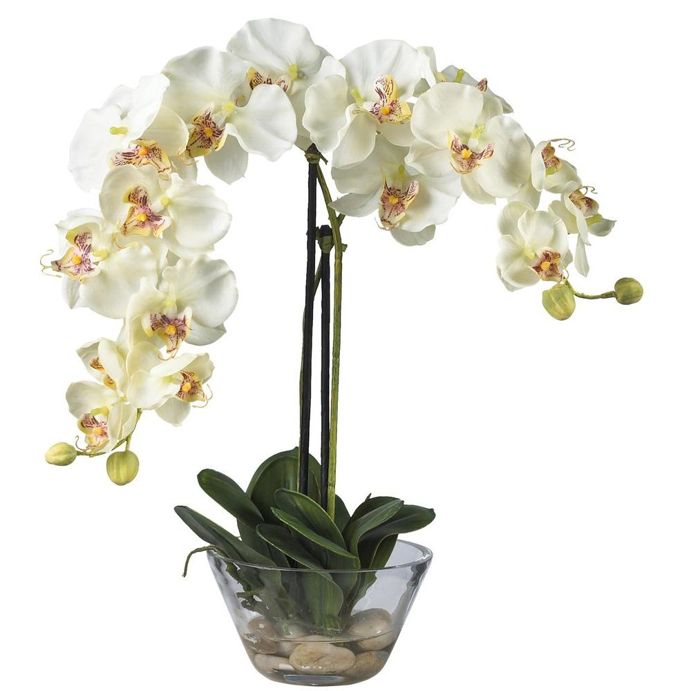 Nearly Natural Double Phalaenopsis With Glass Vase Silk