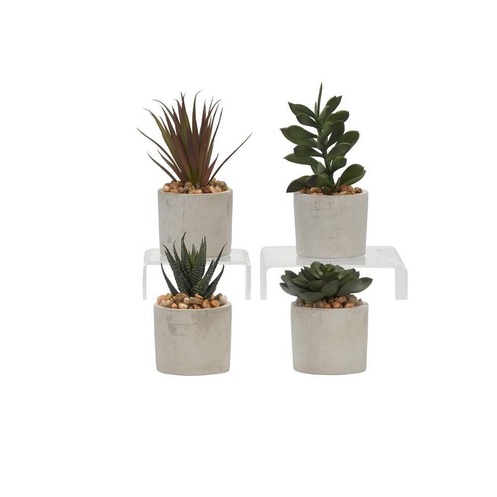Indoor Assorted Succulents in Mini Cement Cylinders (Set of 4)