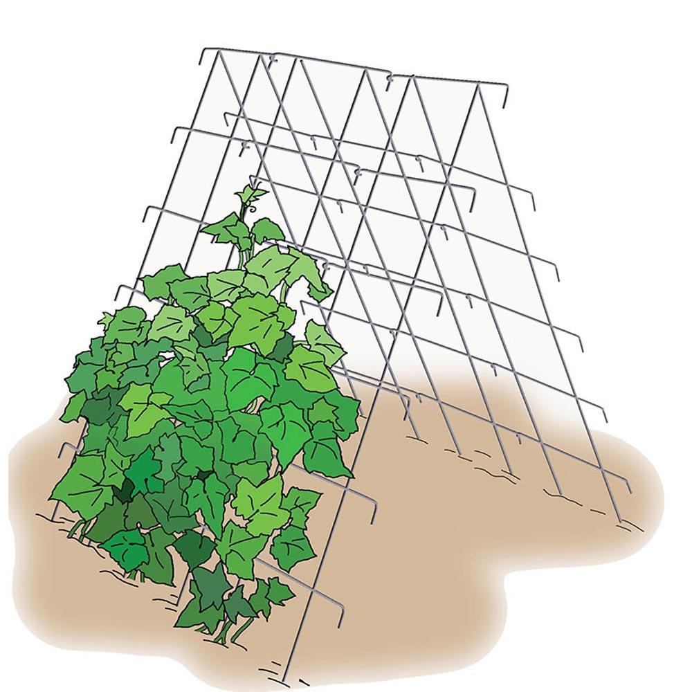Cucumber Garden Growing Support