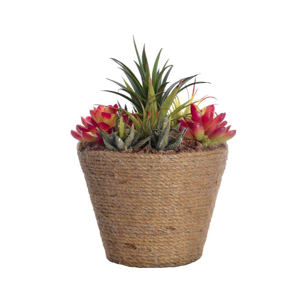 8.5 in. x 8.5 in. x 10.5 in. Tall Succulents in