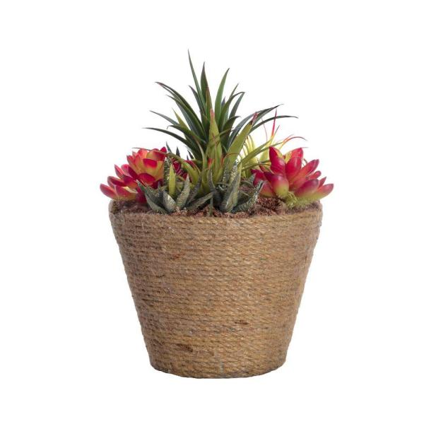 Laura Ashley 8.5 in. x 8.5 in. x 10.5 in. Tall Succulents in Hemp Rope Container