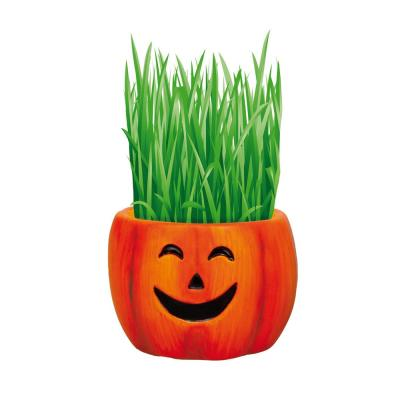 1 Qt. Hair Growing Halloween Pumpkin Kit Barley Grass