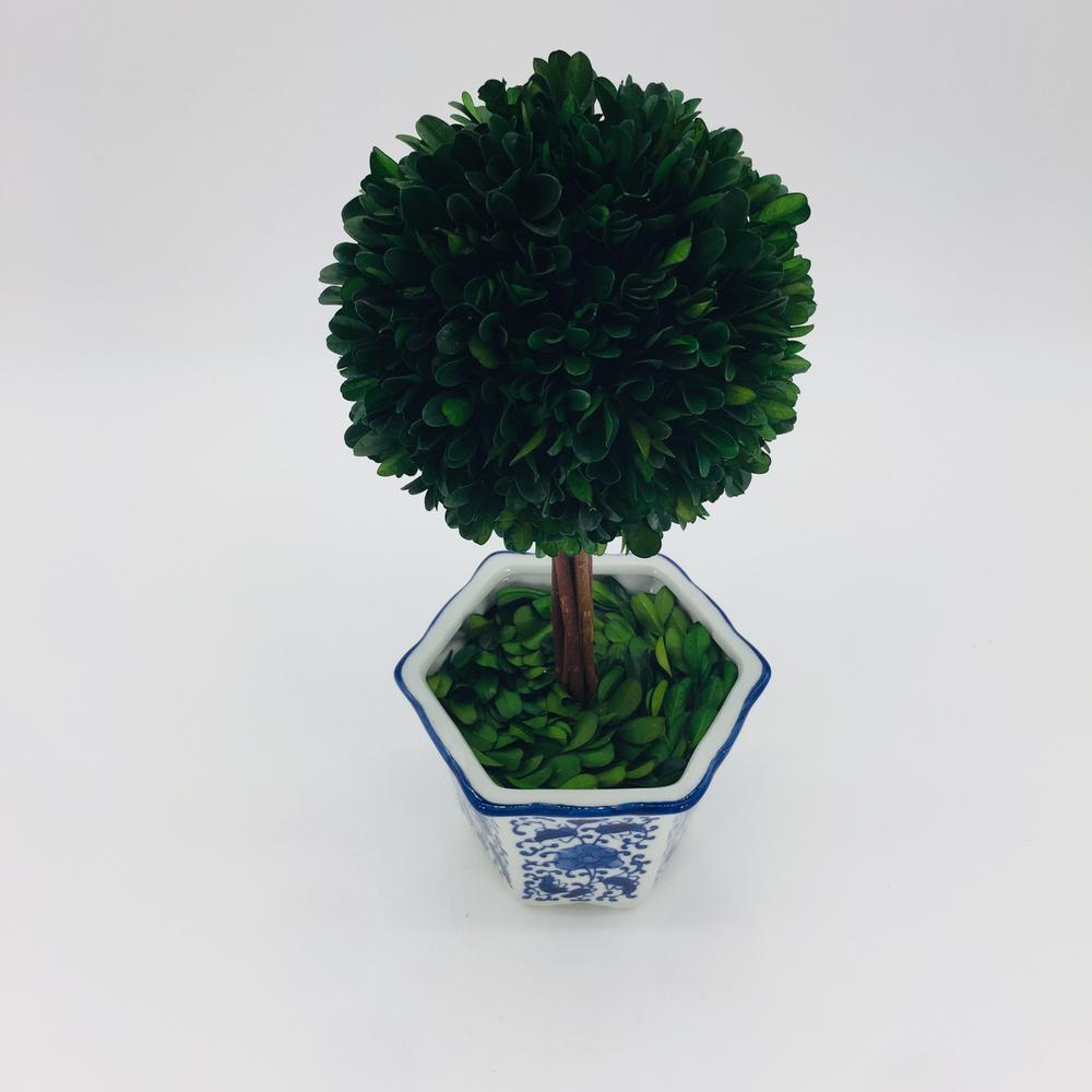 Preserved Boxwood Topiary Ceramic Pot