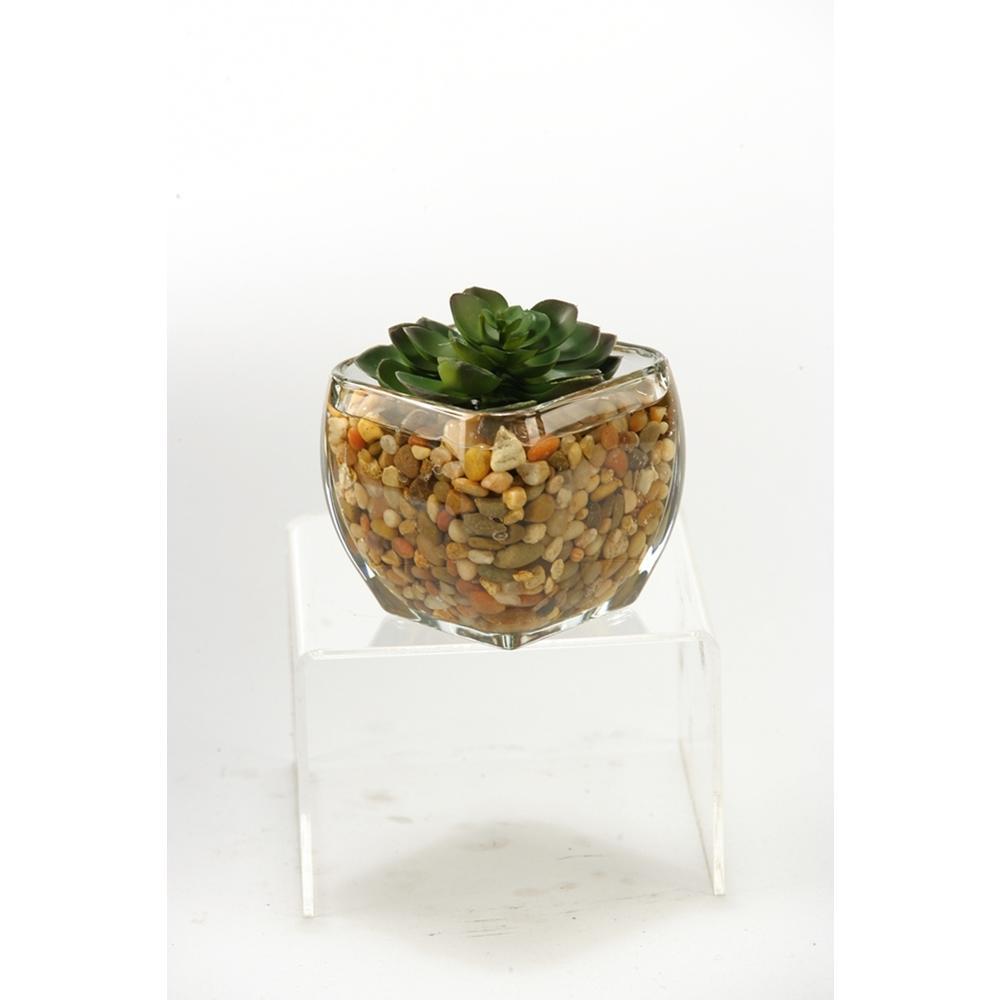 Indoor Small Echeveria in Glass Cube