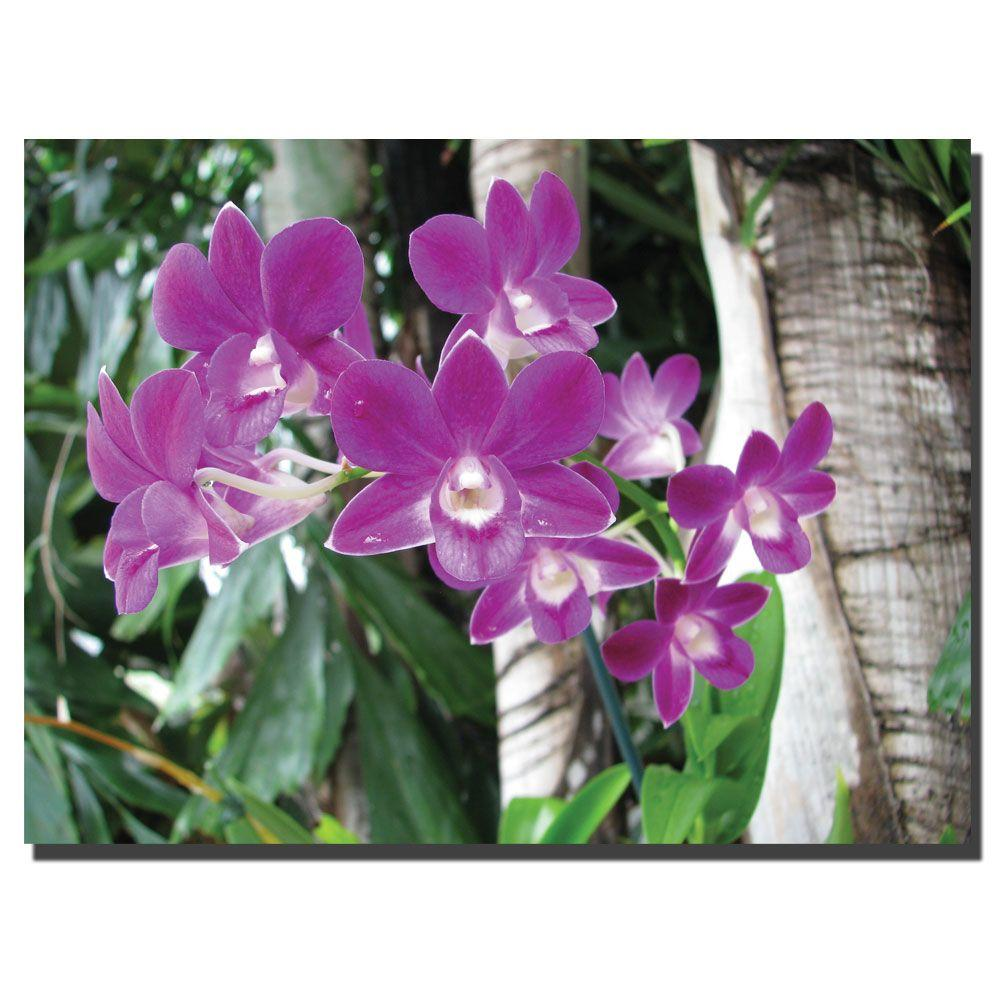 Trademark Fine Art 24 in. x 32 in. Purple Orchid Canvas Art-DISCONTINUED