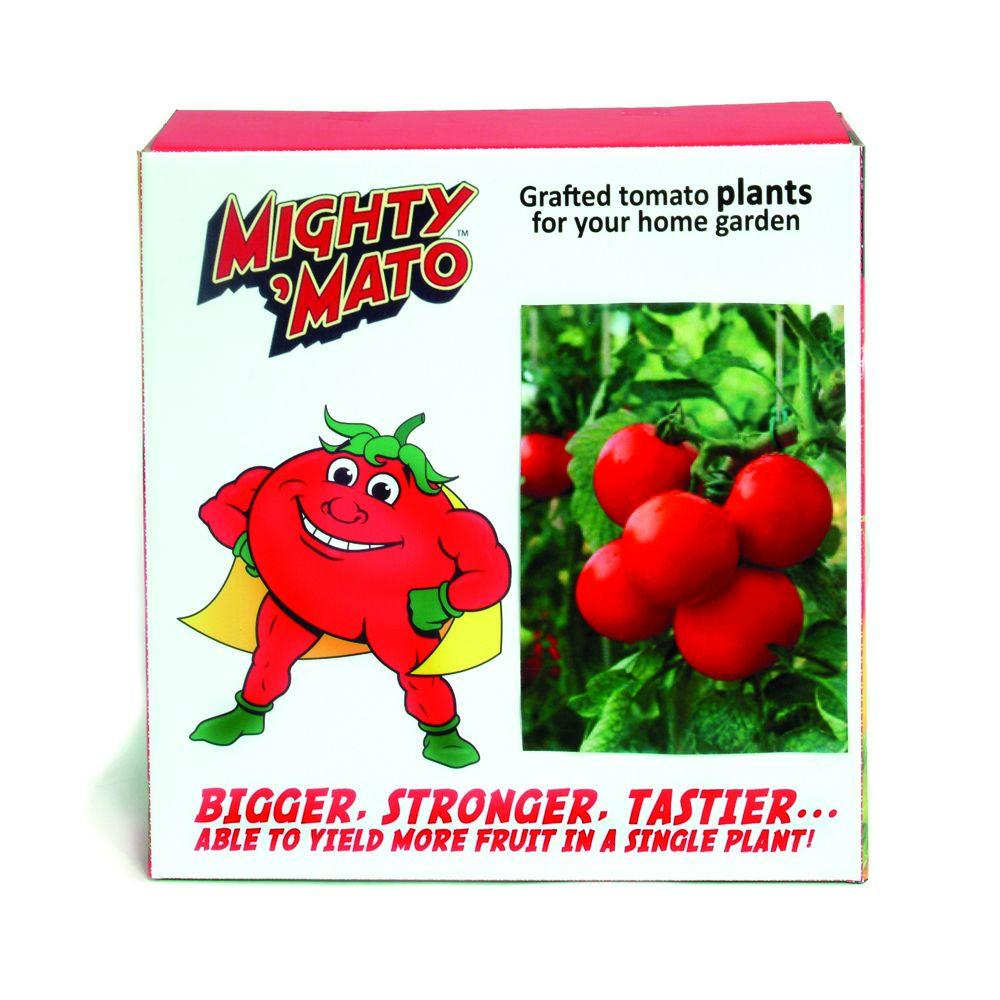Mighty 'Mato Big Beef Grafted Tomato Plant (3-Pack)-DISCONTINUED