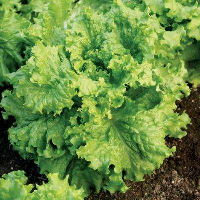 Dark Green Lettuce Walmann's Seeds Pack