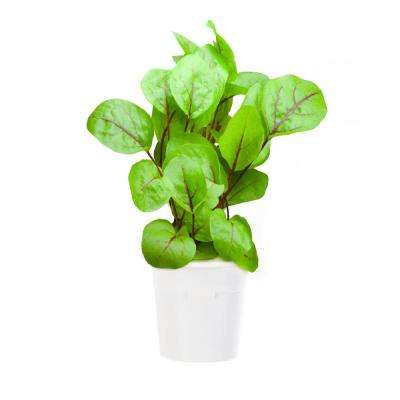 Bloody Sorrel Refill (3-Pack) for Smart Herb Garden
