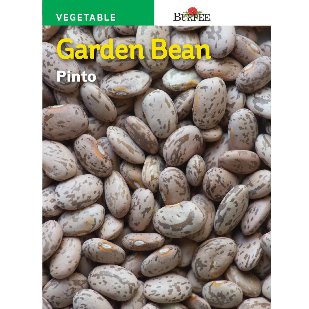 Burpee Spanish Bean Shell Pinto Seed 69288 The Home Depot