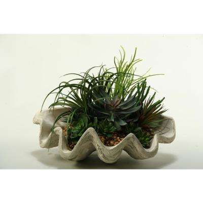 Indoor Pearl Grass, Assorted Echeveria, Aloe and Succulents in Resin Clam Shell