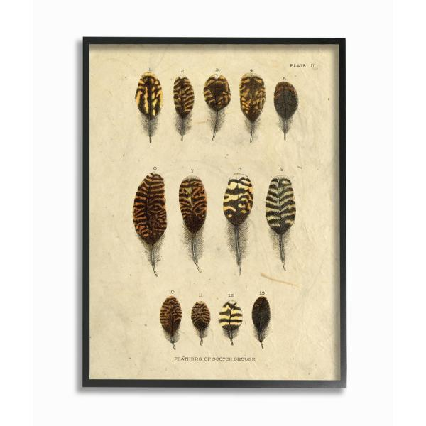 """The Stupell Home Decor Collection - 16 in. x 20 in. """"Aged Paper Vintage Feather Identification Print"""" by Daphne Polselli Framed Wall Art"""