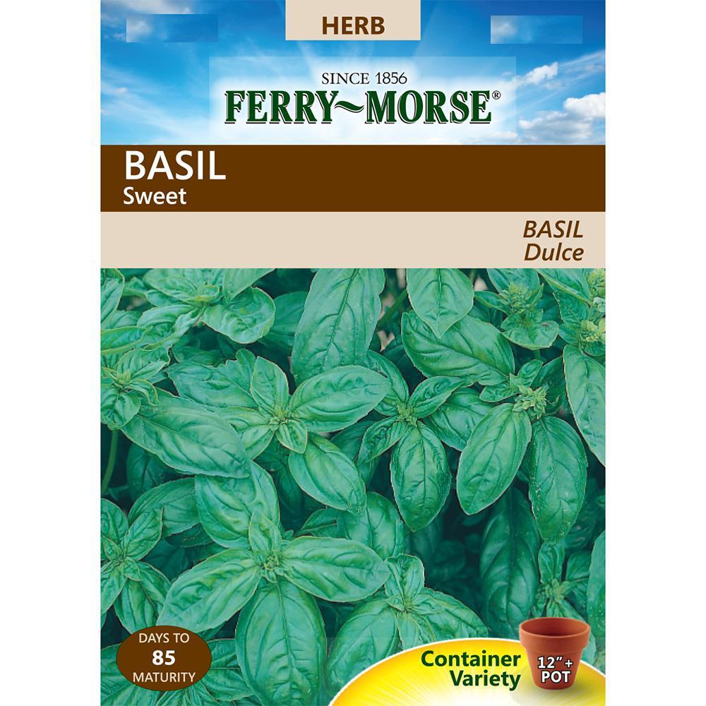Basil Herb Sweet Seeds