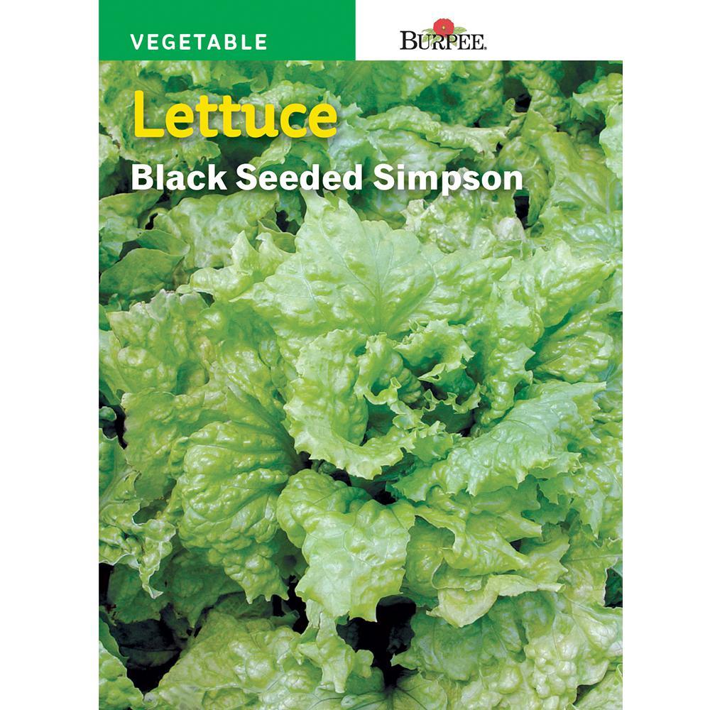 Lettuce Black-Seeded Simpson Seed