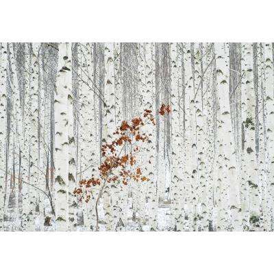 White Birch Forest Wall Mural