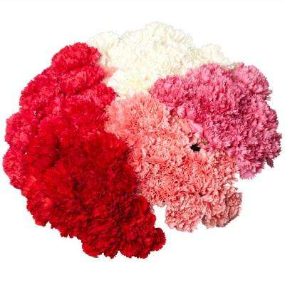 Fresh Carnation Flowers (200 Stems) for Mother's Day
