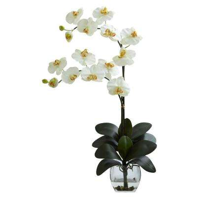 Double Phalaenopsis Orchid with Vase Arrangement in Cream