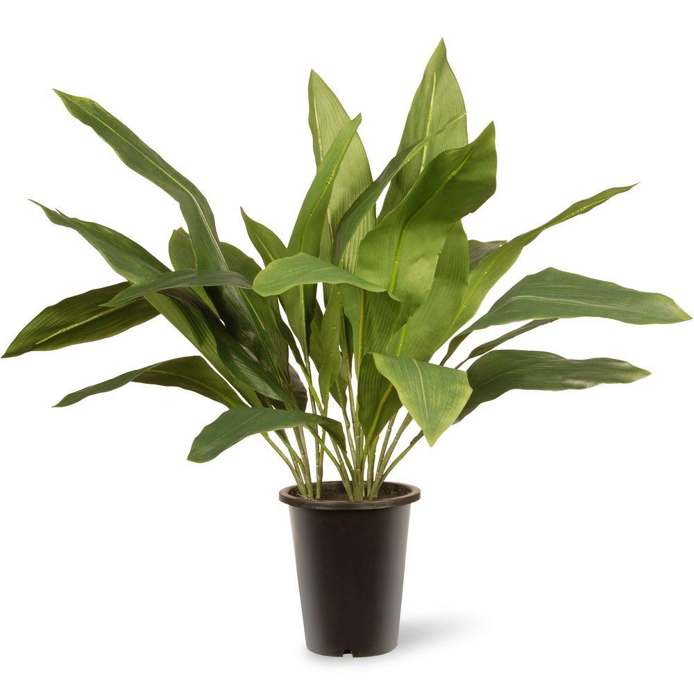 National Tree Company 30 in. Garden Accents Aspidistra Plant