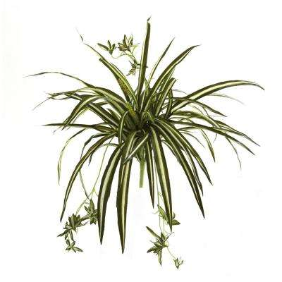 23 in. Spider Plant Bush (Set of 4)