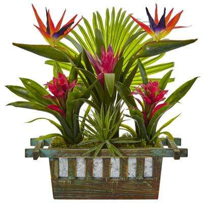 Indoor Birds of Paradise and Bromeliad in Planter