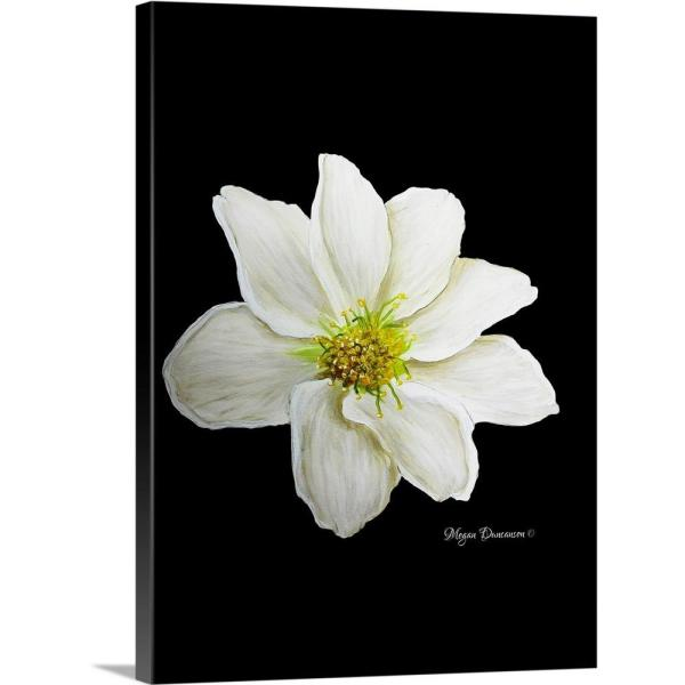 GreatBigCanvas ''White Flower I'' by Megan Duncanson Canvas Wall Art