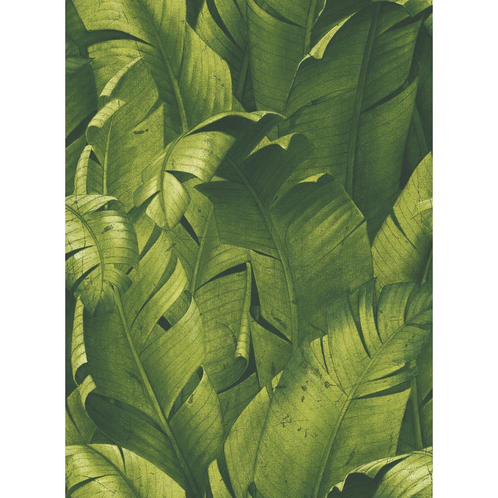 Tropical Banana Leaf Green Vinyl Peelable Wallpaper (Covers 30.75 sq. ft.)