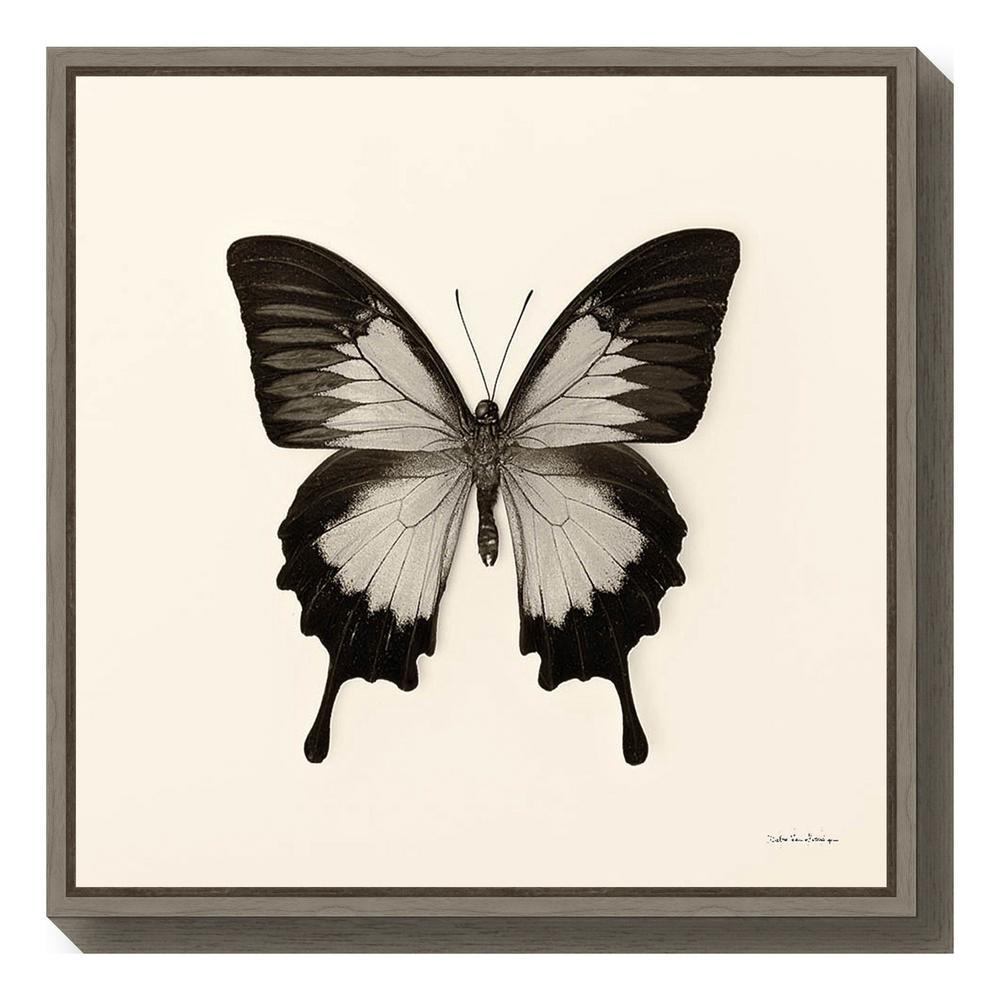 """""""Butterfly III BW Crop"""" by Debra Van Swearingen Framed Canvas Wall Art"""