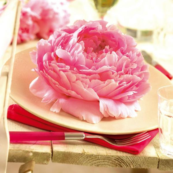 Van Zyverden Peonies Dinnerplate Pink Roots (Set of 5)