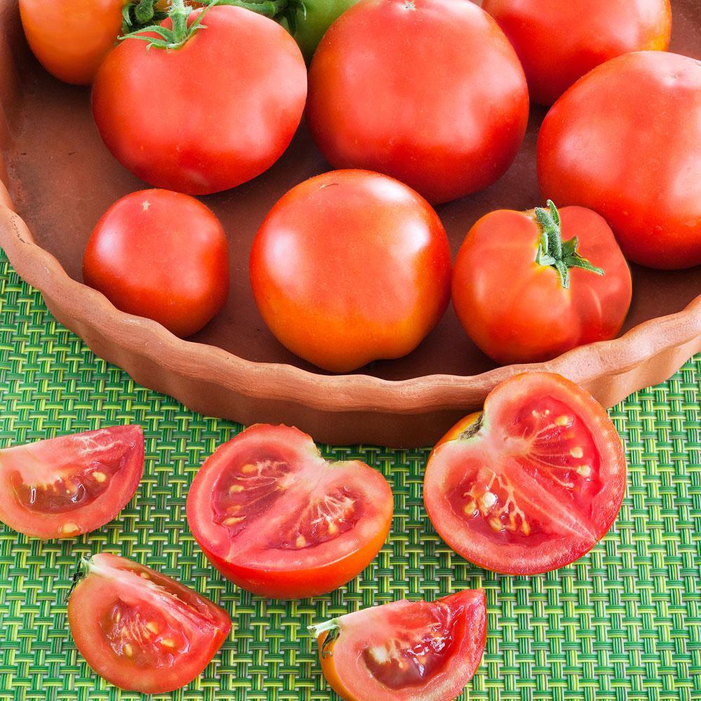 BonniePlants Bonnie Plants 2.32 Qt. Tomato-Patio