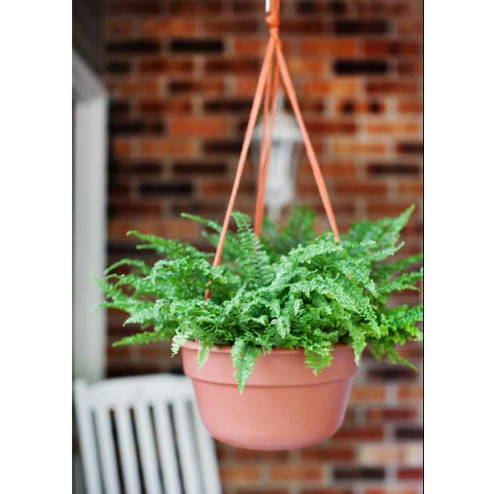 12 x 6.75 Chocolate Dura Cotta Plastic Hanging Basket Planter
