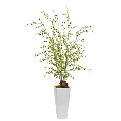 Indoor Night Willow in White Planter
