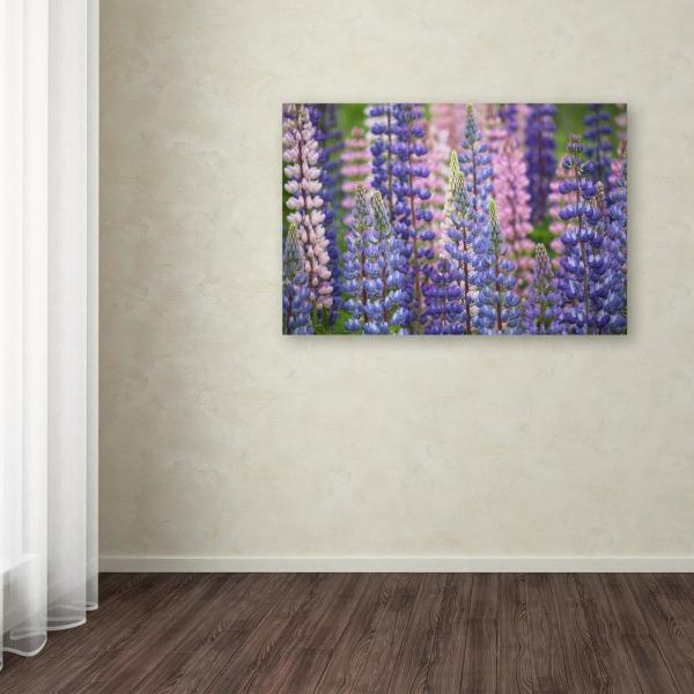 Trademark Fine Art 30 in. x 47 in. ''Blue Pink Lupine