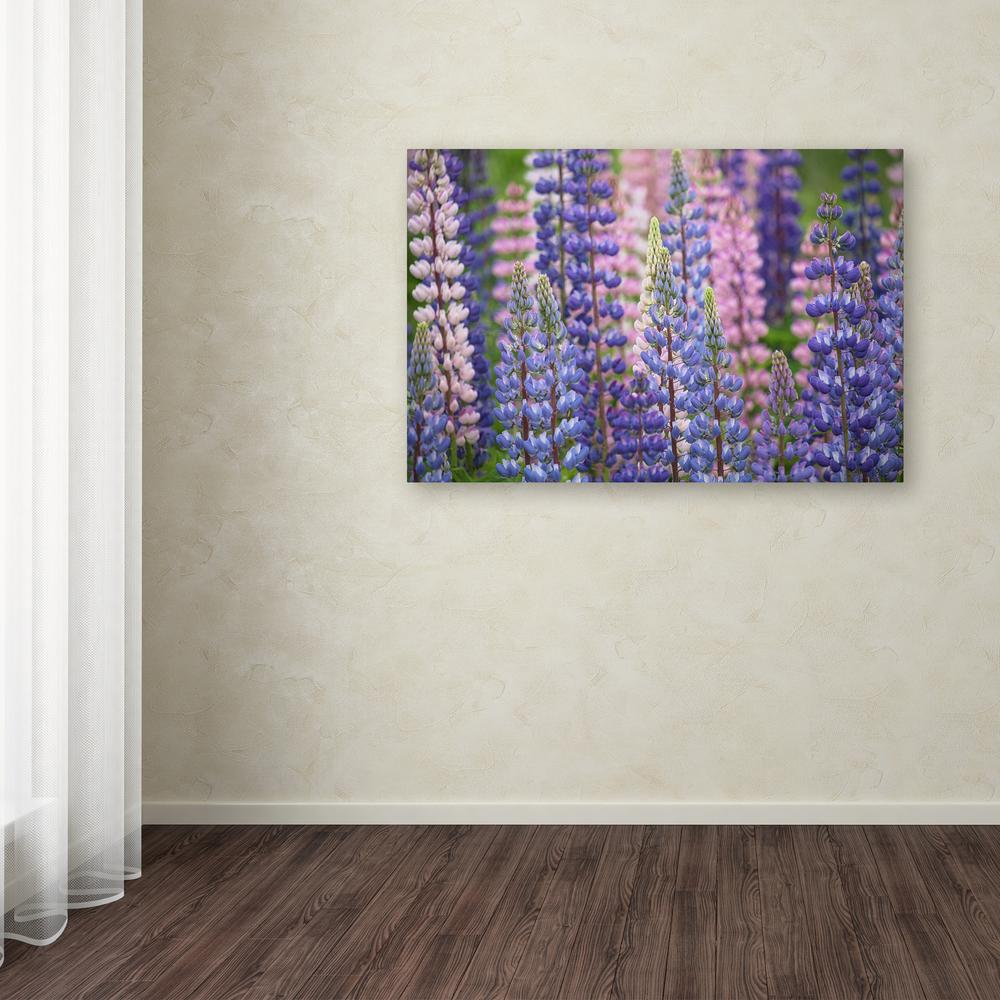 """Trademark 30 in. x 47 in. """"Blue Pink Lupine Flowers"""" by C..."""