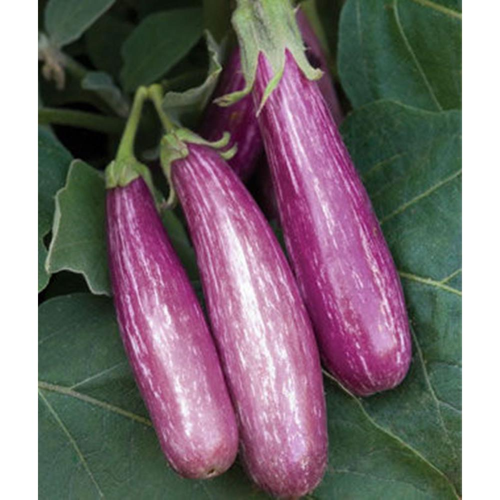 proven winners fairy tale eggplant live plant vegetable 4 25 in