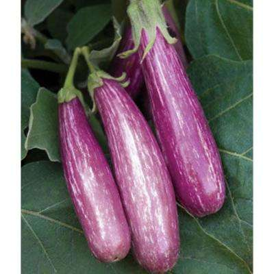 Fairy Tale Eggplant, Live Plant, Vegetable, 4.25 in. Grande
