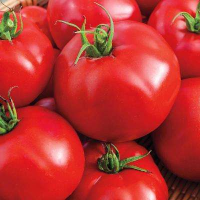 Tomato Tasty Beef Hybrid Vegetable Seeds (20 Seed Packet)