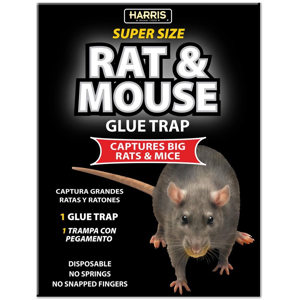 1 Rat and Mouse Glue Trap - Super Size